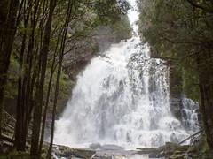 Bridal veil (LeelooDallas) Tags: australia tasmania nelson falls landscape dana iwachow fuji finepix hs20 exr water waterfall tree forest