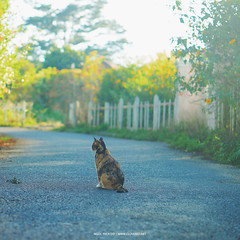 Cat in Da Lat (dolosan) Tags: dalat vietnam travel cat animal marigold sunflower