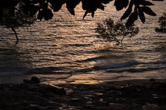 Lameroo Beach (natashanott) Tags: ocean water plant plants leaves leaf trees tree sea sunset sun rays