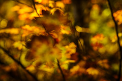 Impressions of Fall (dwolters2) Tags: washington northcascades mountians