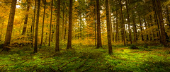 Autumn wood (michael.taferner) Tags: canon eos 6d 24105l nature forest green tree light yellow leaf moss fall october
