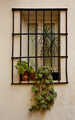 Window in Sevilla - HWW! (suzanne~) Tags: window outdoor plant street seville spain andalusia
