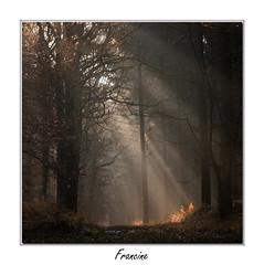 IMGP5536 (Francinen89) Tags: raidesoleil fort forest sunrays matin morning brouillard brume fog nature
