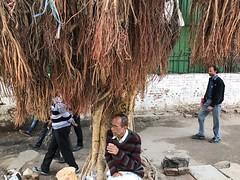 At Chai is the Soul (Mayank Austen Soofi) Tags: delhi walla tree at chai is soul