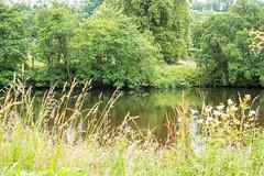 Clyde_Walkway_DSC4830.jpg (tookiebunten) Tags: riverclyde lanarkshire clydevalley southlanarkshire clydewalkway walkwithtookie