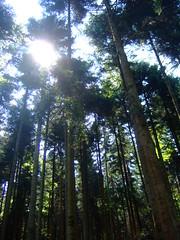DSCF0829 (JohnSeb) Tags: trees tree forest germany deutschland rboles bosque arbre schwarzwald baum fort badenweiler johnseb bumen eurotour2012