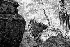 R O C K in the U S A (Beau Finley) Tags: blackandwhite monochrome rock forest virginia nationalpark woods nps shenandoah shenandoahnationalpark beaufinley