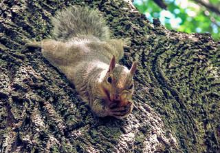 Spider-squirrel