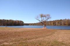 Lake Snowden (Sarah Hina) Tags: autumn lake fall pinetrees lonetree browngrass albanyohio bodyofwater lakesnowden