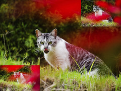 Faco (Sebastin Snchez Osorio) Tags: animals cat mascota