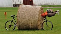 (Will S.) Tags: canada characters princeedwardisland hay bales creatures mypics pei summerside koolbreezefarmsgardencentre