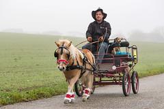 DSC04101_s (AndiP66) Tags: horses schweiz switzerland coach sony kutsche pony stniklaus alpha pferde solothurn ch neuendorf stnicolas 2015 egerkingen waldhtte f456 6dezember sonyalpha 6thofdecember andreaspeters sony70400mm 77m2 sal70400g2 sony70400mmf456gssmii chlausritt a77ii ilca77m2 77ii 77markii slta77ii sagenhof