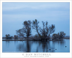 Evening Trees (G Dan Mitchell) Tags: california county blue trees sky usa nature water birds america landscape evening pond wildlife north central merced reflect national valley hour marsh sanjoaquin refuge