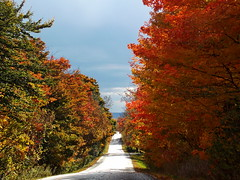 Near To Its End (irfangillani) Tags: life red orange canada green nature landscape colours natural falls collection natureselegantshots absolutelystunningscapes irfanscollection