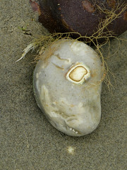 Stone (20) (Padski1945) Tags: onthebeach astone stone pebble afaceinthecrowd likearollingstone stoneme