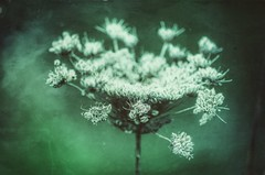 das Wesentliche (***toile filante***) Tags: plant pflanze nature natur details dof bokeh creative kreativ poetic poetisch soul soulful emotions emotional macro makro grunge structure struktur texture textur