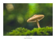 Aquarelle (Naska Photographie) Tags: naska photographie photo photographe paysage proxy proxyphoto mushroom champignon nature sauvage forest foret macro macrophotographie macrophoto color couleur bokeh lumire light composition