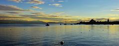 Lumire d'un soir d'automne (Diegojack) Tags: paysages panorama morges baies contrejour coucher soleilcouchant lumire baie lman