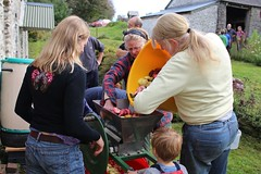 Filling apple scratter with apples (Local Food Initiative) Tags: permaculture apple day apples press pressing cider group sustainable orchard scrat scratting crusher scratted pulper