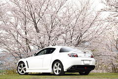 Mazda RX-8 Type S (André.32) Tags: photography car cars japan sportcar sportcars mazdarx8 mazda rx8types rx8 abase3p se3p white rotaryengine rotary types