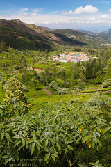 Ooty Tea Plantations (Hank Christensen) Tags: ooty vista natural landscape outside india green outdoor teaplantation tamilnadu asia nature