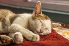 Stray Kitten in Central Nepal (Stewart Miller Photography) Tags: stray kitten nepal cat cute