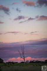 Pink Clouds (Joel Bramley) Tags: bendigo sunset pink tree clouds nature landscape