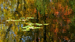 Endicott Park 10-20'16_4192 (photoholic1) Tags: fall waterlilies water reflection abstract