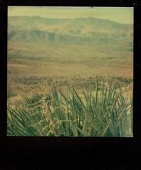 sunset point yucca (EllenJo) Tags: roidweek polaroidweek 2016 sx70 impossibleproject theimpossibleproject arizona az ellenjo ellenjoroberts polaroid instantfilm october19 i17 yavapaicounty yucca reststop mountains bradshaws