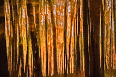 Moody Forest 6-0 F LR 11-1-16 J191 (sunspotimages) Tags: forest trees tree nature woods artwork artistic impressionist impressionism