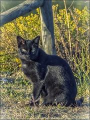 UNA DE GATOS 05 (BLAMANTI) Tags: gatos mascotas felinos