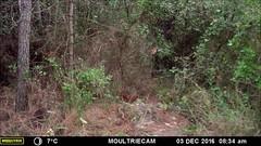 Sciurus vulgaris (MdMorella) Tags: sciurus vulgaris ardilla catllar tarragona