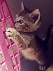 Filhote ! (deisegomes1) Tags: babycat cat