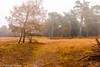 Groot-Heidestein-3 (christiaan.oomes) Tags: nikcolorefexpro autumn november landscape tamron nederland utrecht netherlands herfst d7200 heidestein