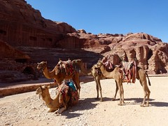 Moe van het lopen? Pak een kameel als taxi!