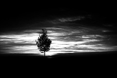 I love this Tree (pwendeler) Tags: baum tree arbre hohestrase blackandwhite sonynex7 sky himmel schwarzweis einfarbig