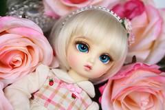Baby rose (borboletta_blu) Tags: volks yosd nana foursisters purenormalskin ns bjd doll resindoll leeke wig evecream enchanteddoll eyes urethane ed milky lightblue 16mm rose pinkroses pink
