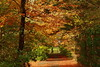 Autumn path (Galway Pete) Tags: autumn ballina mayo ireland nature colours light trees forest mount falcon pskeltonphoto peterskelton