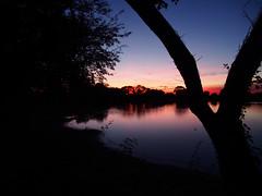 forked (mark.griffin52) Tags: olympusem5 england hertfordshire tringfordreservoir reflections reservoir water tree landscape lake silhouettes sunset