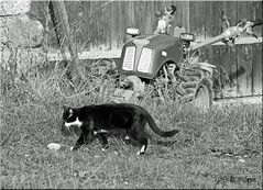 (couleurs gm) Tags: img0279 couleursgm chat cat gato faucheuse mower