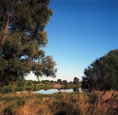 River (malinovsky13) Tags:          60     ukraine film kiev60 river mediumformat landscape nature trees grass water kodak ektar100 kodakektar100