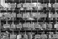 Aoshima Shrine 青島神社, Miyazaki, Kyushu, Japan (takasphoto.com) Tags: 28300mm allinonelens aoshima asia bw blackwhite blackandwhite blancoynegro color d600 day daytime drive driving exterior fullframe invierno japan japani japon japão japón kagoshima kagoshimaprefecture kirishima kirishimacity kirishimashi kirishimayakunationalpark kyushu kyūshū lens mañana miyazaki miyazakiprefecture monochrome morning naturalpark nikkor nikkor28300mmf3556gedvrafs nikon nikond600 noiretblanc ontheroad outdoor photography roadtrip schwarzweisfotografie season street streetphotography time transportation travel travelphotography trip vacation viaje winter アジア ストリートスナップ ニコン ニッコール モノクロ モノクローム 宮崎縣 旅行 日本 宮崎 宮崎県 九州 九州地方 亜細亜 冬