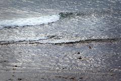 Bobbing Ducks  _6154 (hkoons) Tags: atlantic iceland bay beach birds feathers fiord fjord flight fly inlet island nest nests northeast ocean saltwater sand sea seabirds surf water waves wings shfn