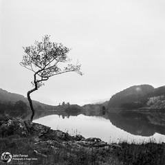 Loch Chon on a slightly over cast day (John Farnan Photography) Tags: scottishlandscape scotland lochchon trossachsnationalpark trossachs blackandwhitefilm filmscan yashica