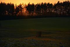 DSC_7038 (Karel Suchnek) Tags: evening sunset late autumn firstfrost