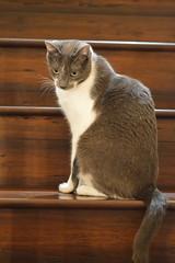 DSC_0081 (kaymann+l+woo) Tags: catsofinstagram cats cute