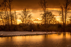 A Candlelight Dinner ( ) Tags: bc canada richmond goldenhour seascape vancouver sunset water sea sky sun ocean seagull feast bird animal beautiful call clouds light trees autumn tree outdoor reflection jetty landscape