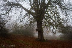 Westwood Fog (Rich Friend) Tags: trees mist fog autumn seasons beverley yorkshire eastriding england countryside outdoors landscape nature light colour branches leaves