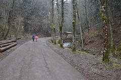 Road to Camaldoli (willkayak) Tags: parco nikon neve bosco camaldoli foresta eremo d700
