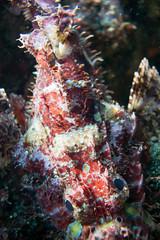 20150802-DSC_3431.jpg (d3_plus) Tags: sea sky fish beach japan scenery underwater diving snorkeling  shizuoka    apnea izu j4  waterproofcase    skindiving minamiizu       nikon1 hirizo  1030mm  nakagi 1  nikon1j4 1nikkorvr1030mmf3556pdzoom beachhirizo misakafishingport  1030mmpd nikonwpn3 wpn3